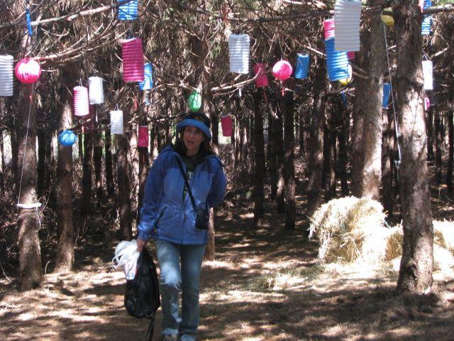 Forêt 11